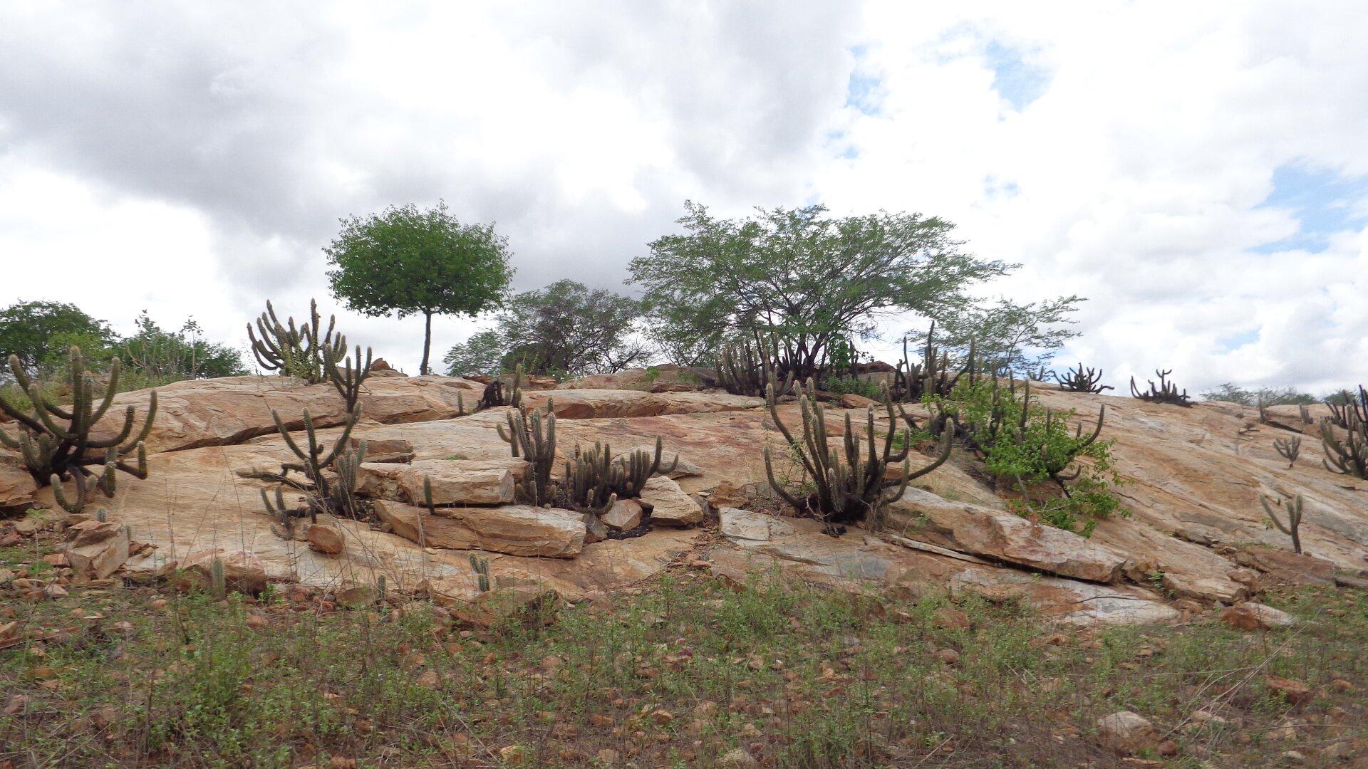 Na zdjęciu suche zarośla porastające kamienisty teren.