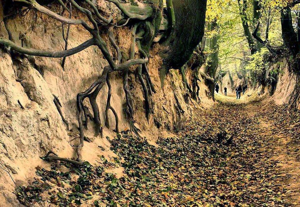 Na zdjęciu głęboki wąwóz ostromych, urwistych, piaszczystych zboczach ipłaskim dnie. Wzboczach odkryte korzenie drzew.