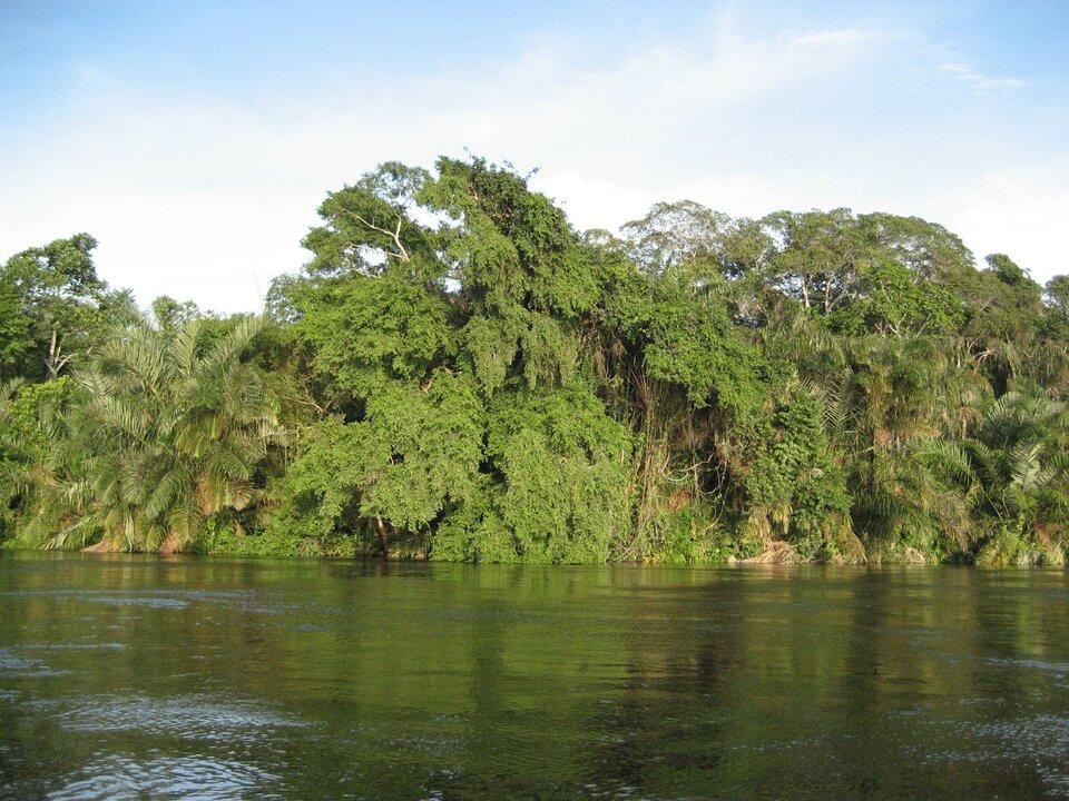 Las równikowy wKotlinie Kongo