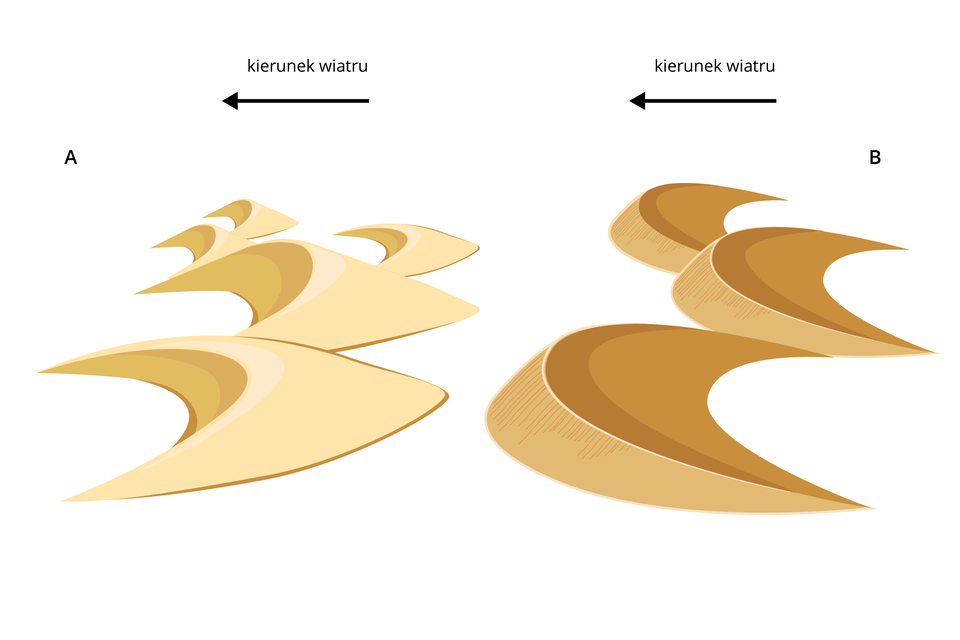 Ilustracja przedstawiająca porównanie dwóch rodzajów wydm powstających winnych warunkach. Strzałkami zaznaczono kierunek wiatru. Wydmy zlewej strony oznaczone literą Amają ramiona wydłużone izwrócone zgodnie zkierunkiem wiatru. Wydmy zprawej strony oznaczone literą Bmają ramiona zwrócone przeciwnie do kierunku wiatru.