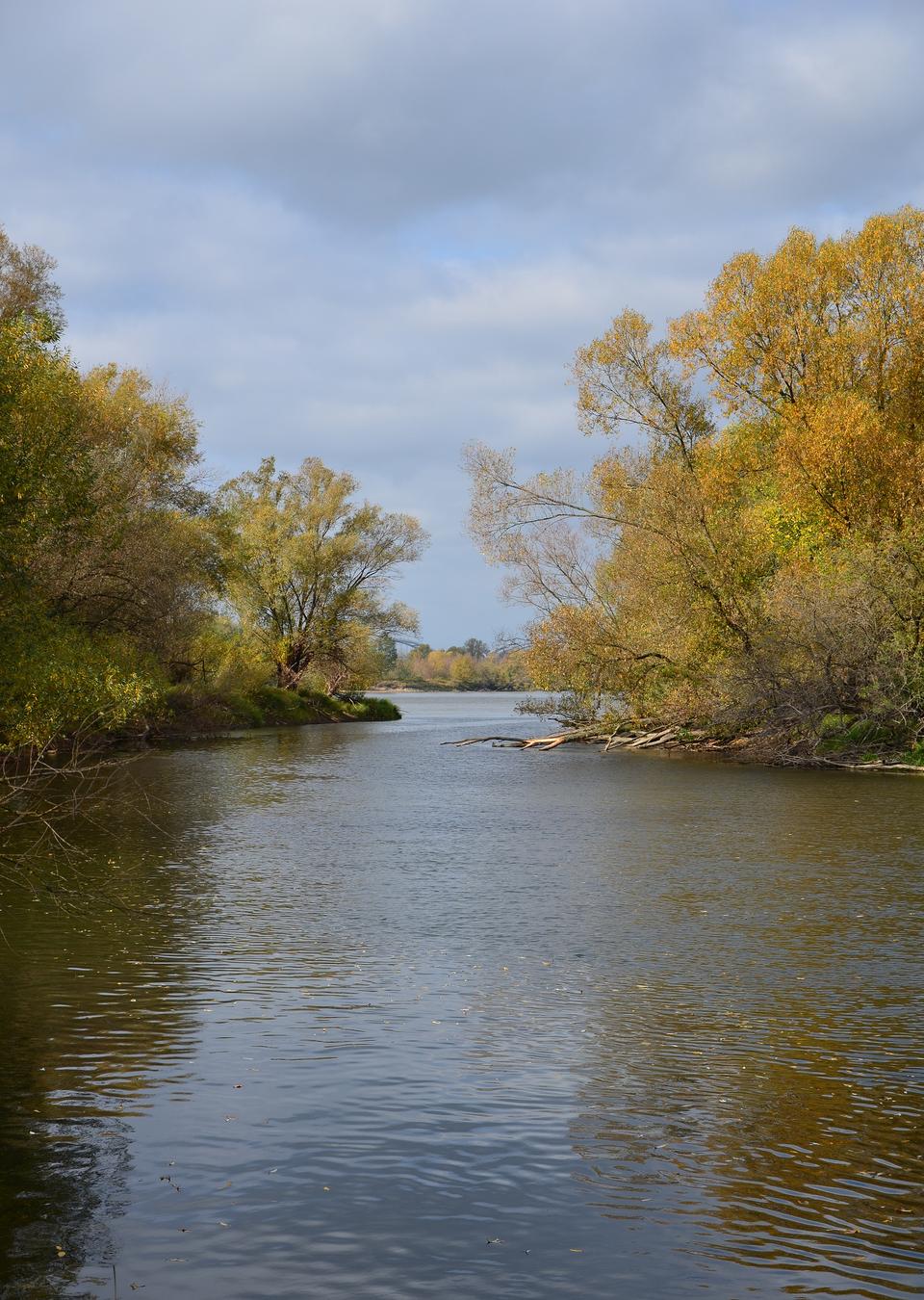 Fotografia przedstawia ujście rzeki Drwęcy, po bokach którego rosną drzewa