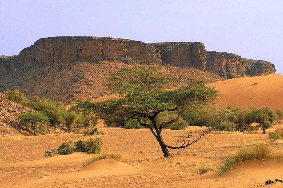 Na zdjęciu rozległe piaszczyste tereny, kępy traw, krzewy idrzewa. Wtle skaliste strome ostańce.