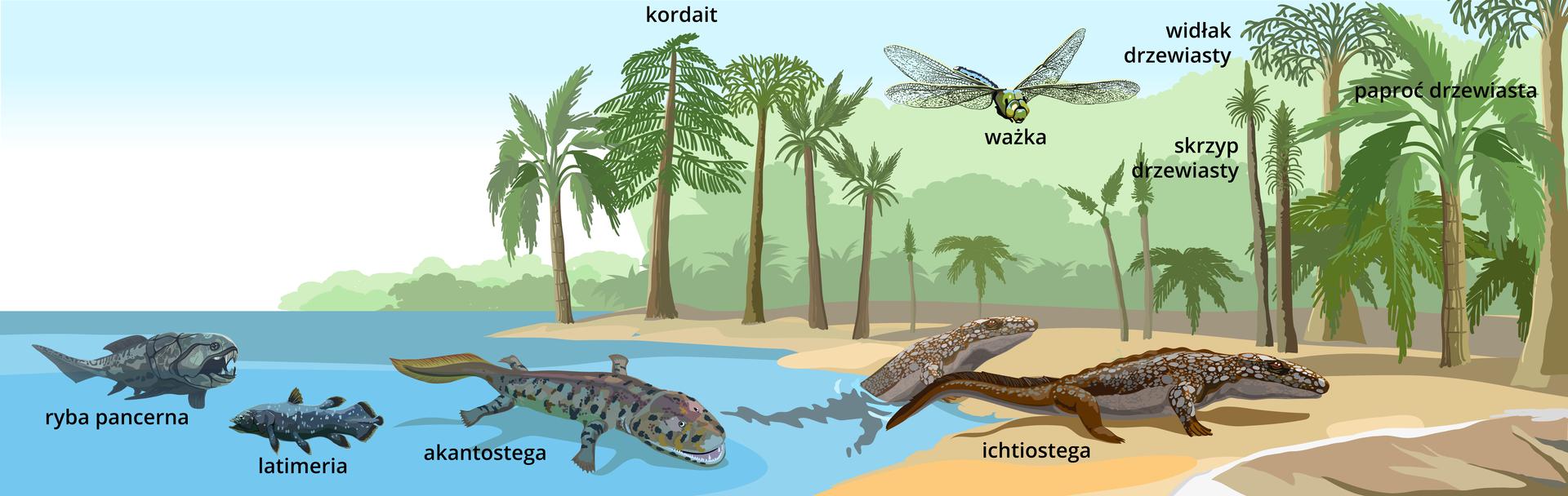 Grafika przedstawiająca erę wczesnych zwierząt lądowych – dominację płazów. Na lądzie widać las karboński: drzewiaste widłaki, paprocie, skrzypy, nieliczne nasienne kordaity. Zwierzęta na lądzie to: ogromna ważka, ichtiostega (wychodząca zwody), akantostega, sejmuria, dimetrodon (gad ssakokształtny), azwierzęta wodne to ryba trzonopłetwa oraz ryba pancerna.