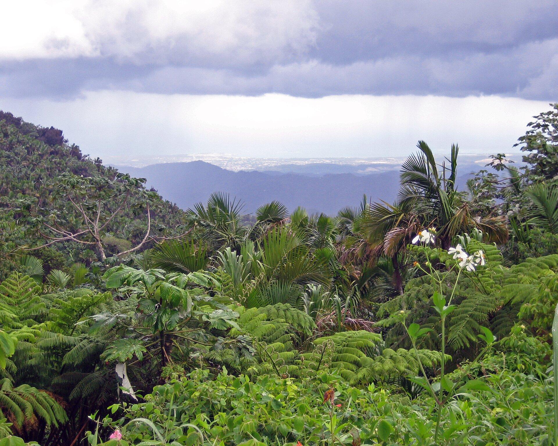 Na zdjęciu zróżnicowane gatunki soczyście zielonych roślin, gęsto porastające teren. Wtle widok na góry.