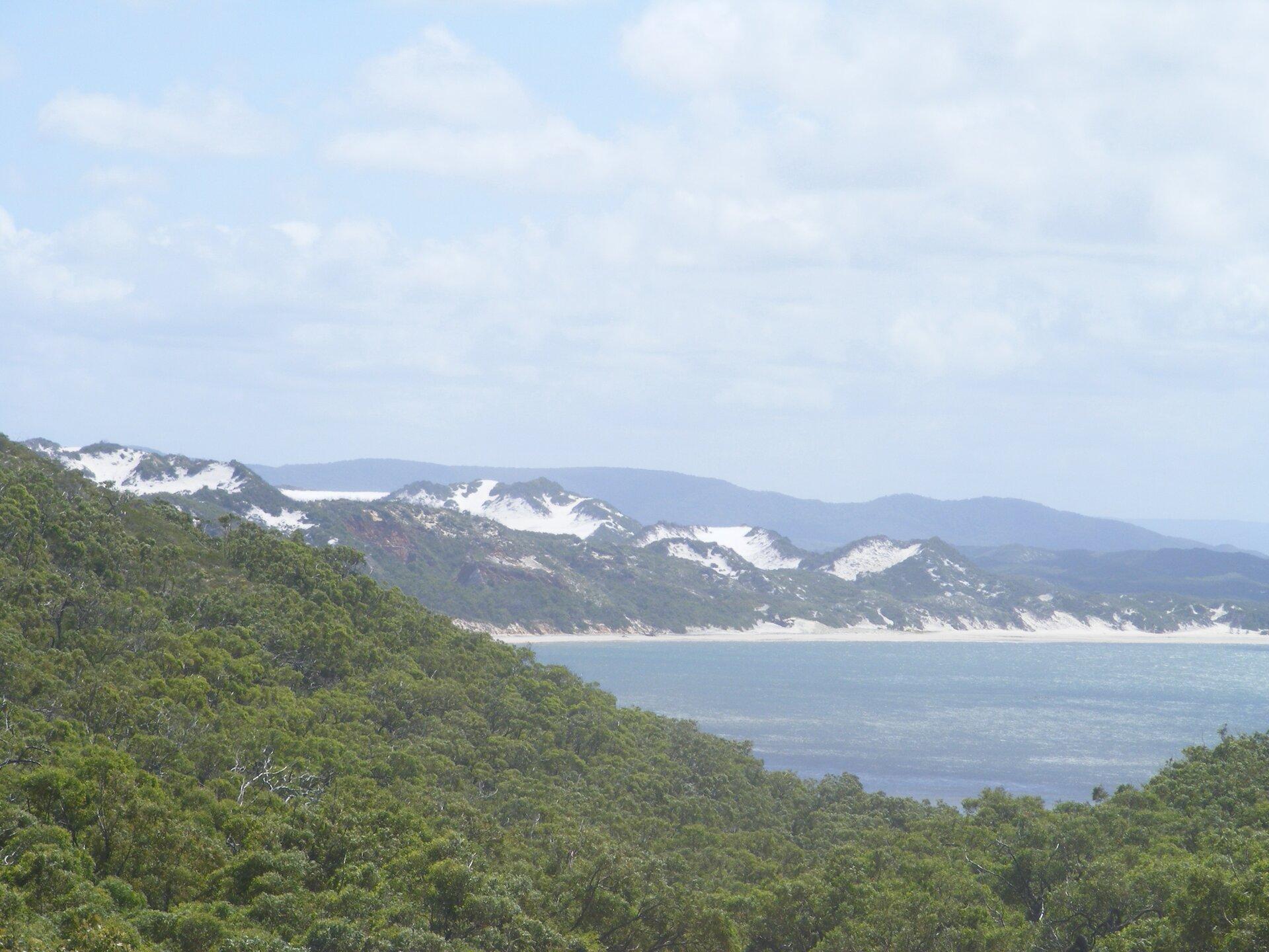 Na zdjęciu fragment zatoki, plaża piaszczyste wydmy porośnięte roślinnością, na pierwszym planie gęsty las.