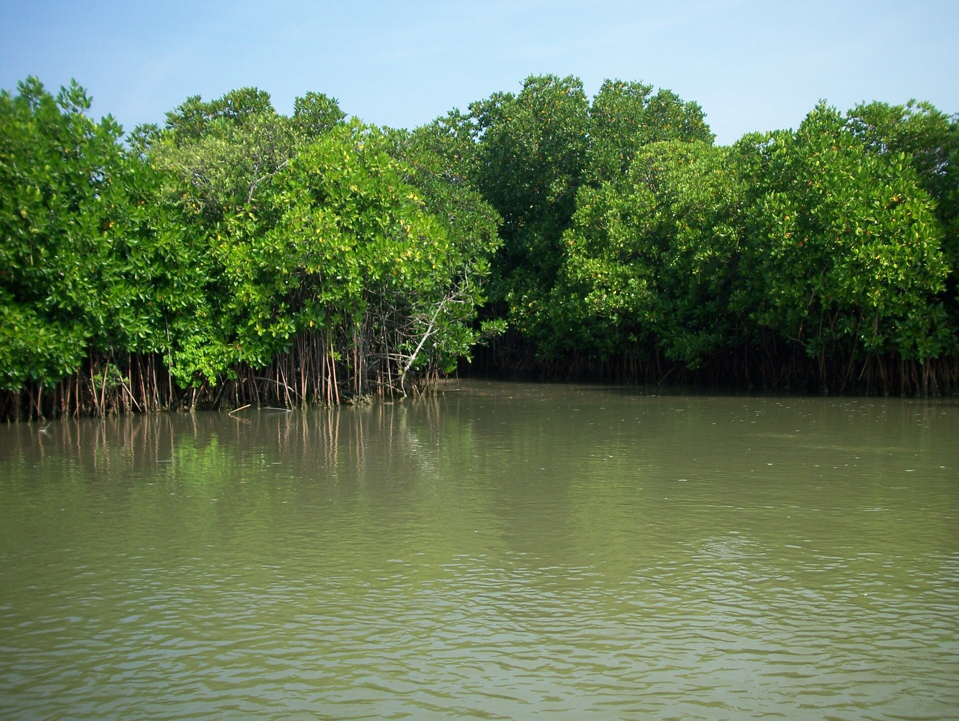 Na zdjęciu brzeg zbiornika wodnego, bezpośrednio wwodzie rosną bujne drzewa.