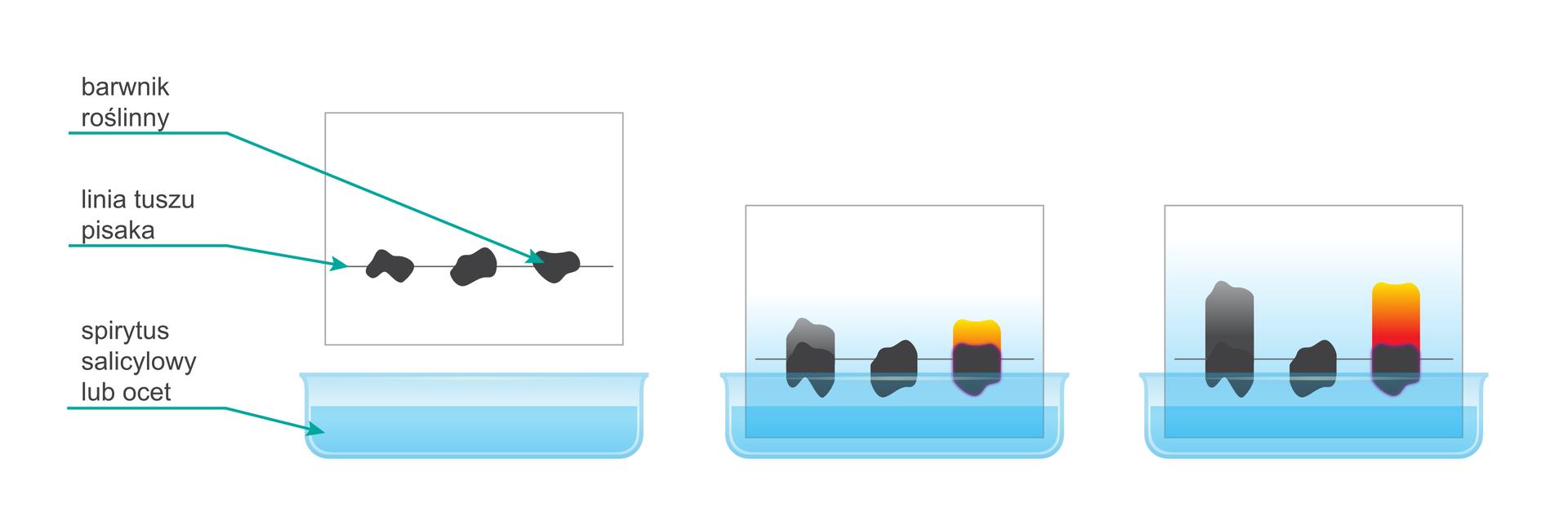 Fazy rozwijania chromatografu