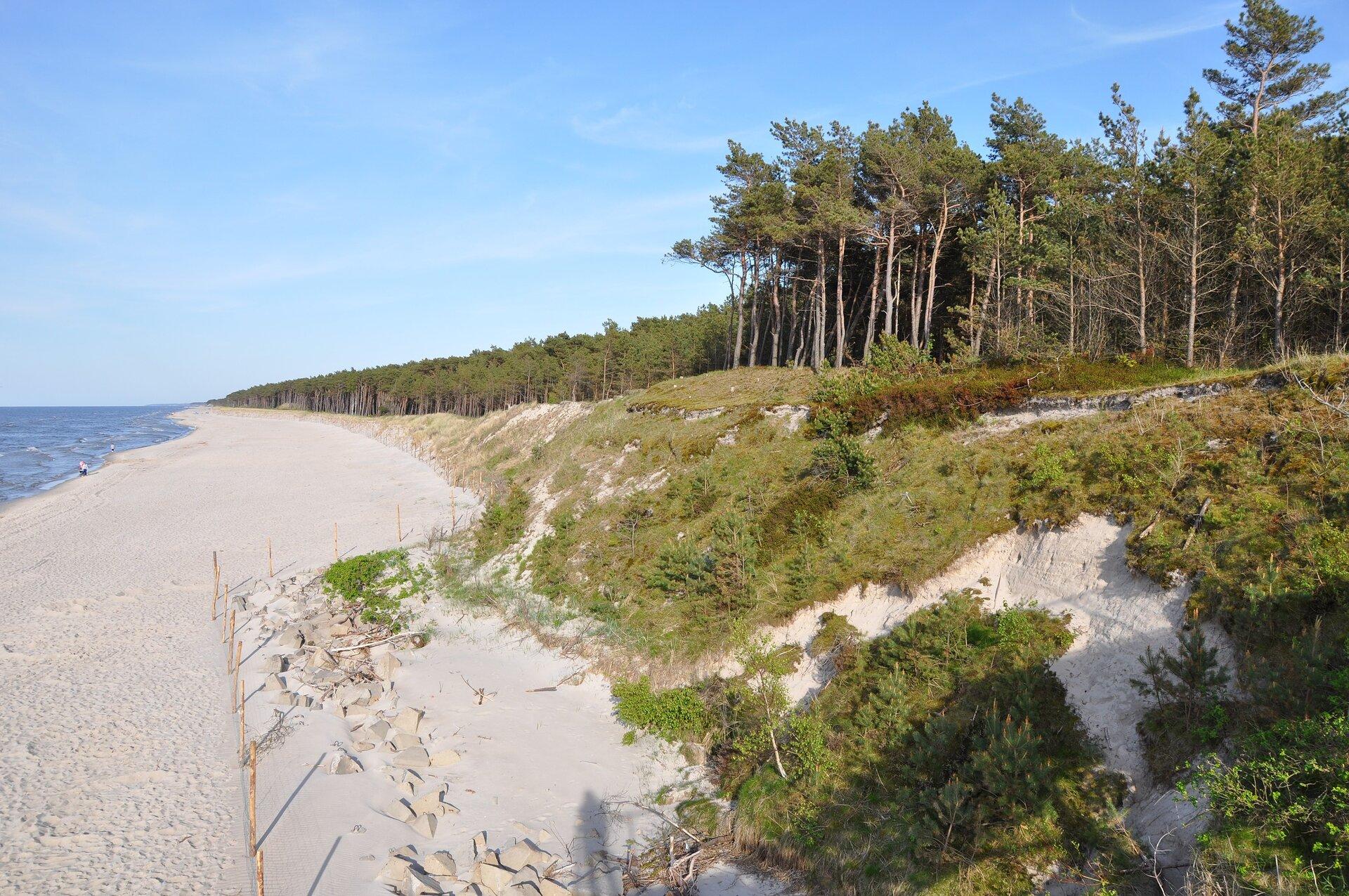 Zdjęcie przedstawia nadbałtyckie wydmy. Nie są tak wysokie jak klify, lekko pagórkowate, porośnięte wgłównej mierze niską roślinnością, krzewami itrawami. Wtle sosny.