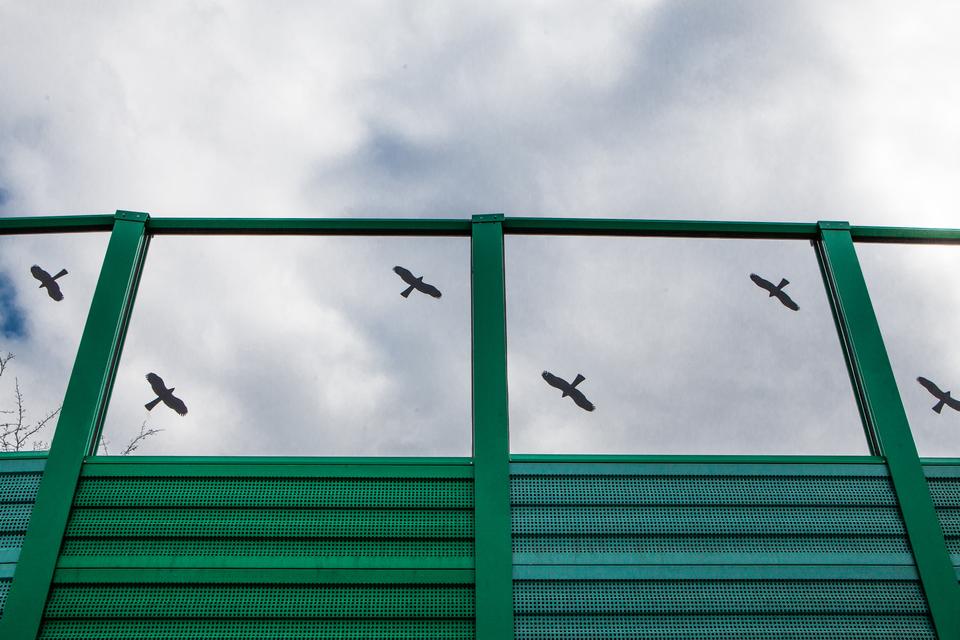 Fotografia przedstawia przezroczysty ekran akustyczny znaklejonymi sylwetkami ptaktów drapieżnych.