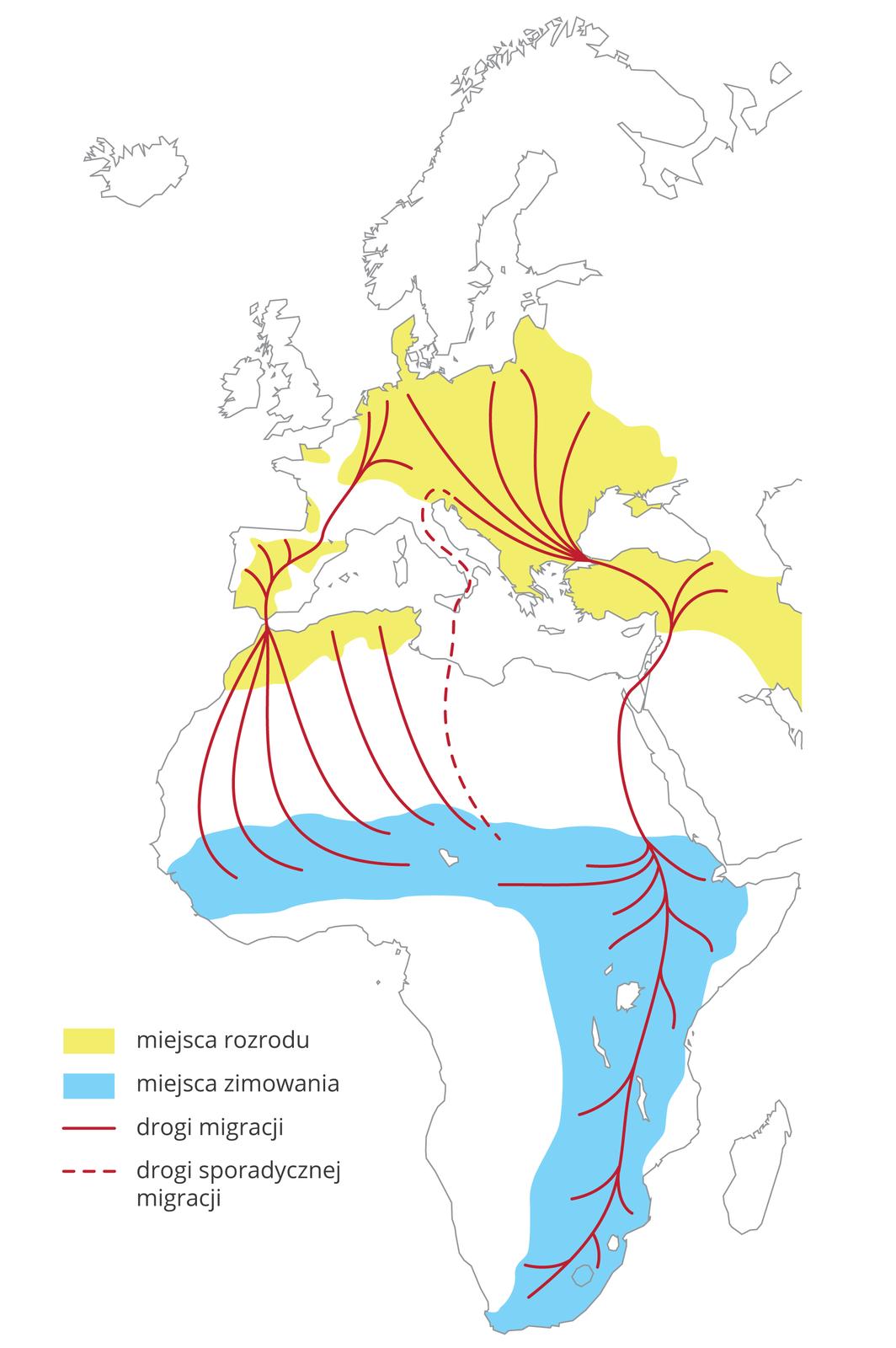 Ilustracja przedstawia wycinek mapy świata zczęścią Europy iAfryką. Żółtym kolorem oznaczono na niej miejsca rozrodu bocianów białych. Niebieski kolor oznacza miejsca ich zimowania. Czerwone linie wskazują drogi migracji. Czerwona linia przerywana oznacza drogę sporadycznej migracji.