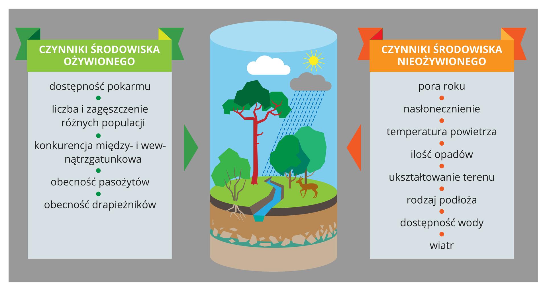 Infografika składa sie z3 części. Po środku znajduje się schemat ekosystemu lasu. Po prawej stronie wymienione są czynniki środowiska nieożywionego takie jak pora roku inasłonecznienie, apo lewej środowiska ożywionego, takie jak zagęszczenie osobników idostepność pokarmu.