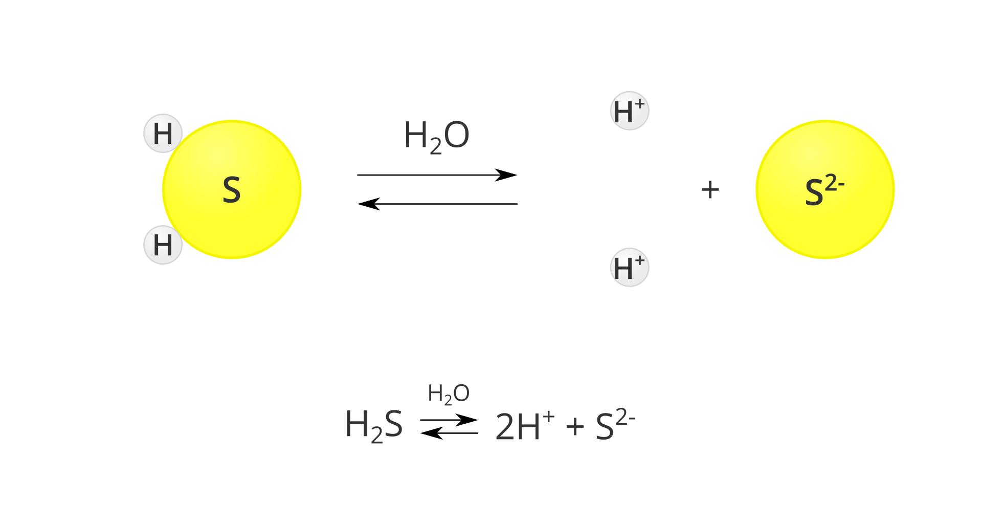 Modelowy schemat dysocjacji kwasu siarkowodorowego. Po lewej stronie planszy znajduje się model cząsteczki siarkowodoru, zbudowany zdużego żółtego koła oznaczonego listerą Siprzylegających do niego dwóch małych szarych kół oznaczonych literą H. Pośrodku planszy znajduje się znak reakcji przebiegającej wobie strony, mający postać dwóch równolegle ułożonych strzałek, zktórych górna skierowana jest wprawo, adolna wlewo. Nad strzałkami znajduje się wzór H2O. Po prawej stronie znajduje się zapis rozpadu na jony: dwie szare kulki oznaczone jako Hplus, znak dodawania oraz jedna duża żółta kula oznaczona jako S2 minus. Pod schematem zapis tej samej reakcji wpostaci sumarycznej: cząsteczka H2S wobecności wody przechodzi wdwa jony Hplus oraz jon S2 minus.