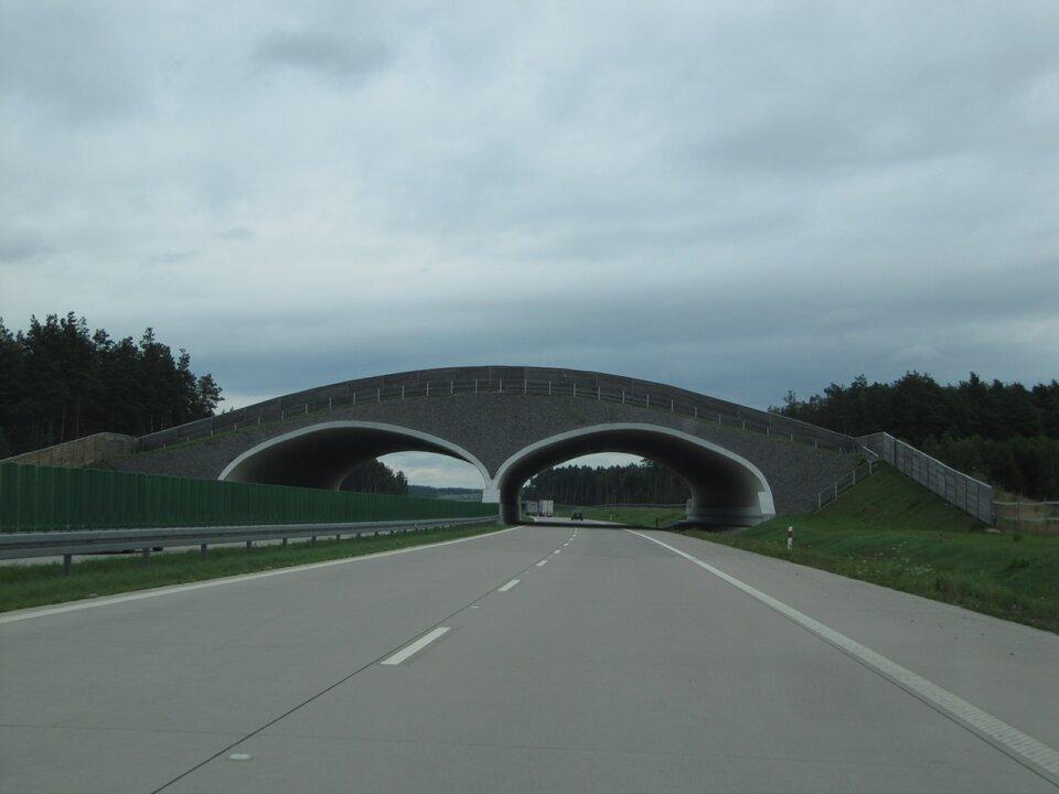Na zdjęciu autostrada, dwa pasy ipobocze, ogrodzona siatką, nad autostradą wiadukt – korytarz ekologiczny dla zwierząt.