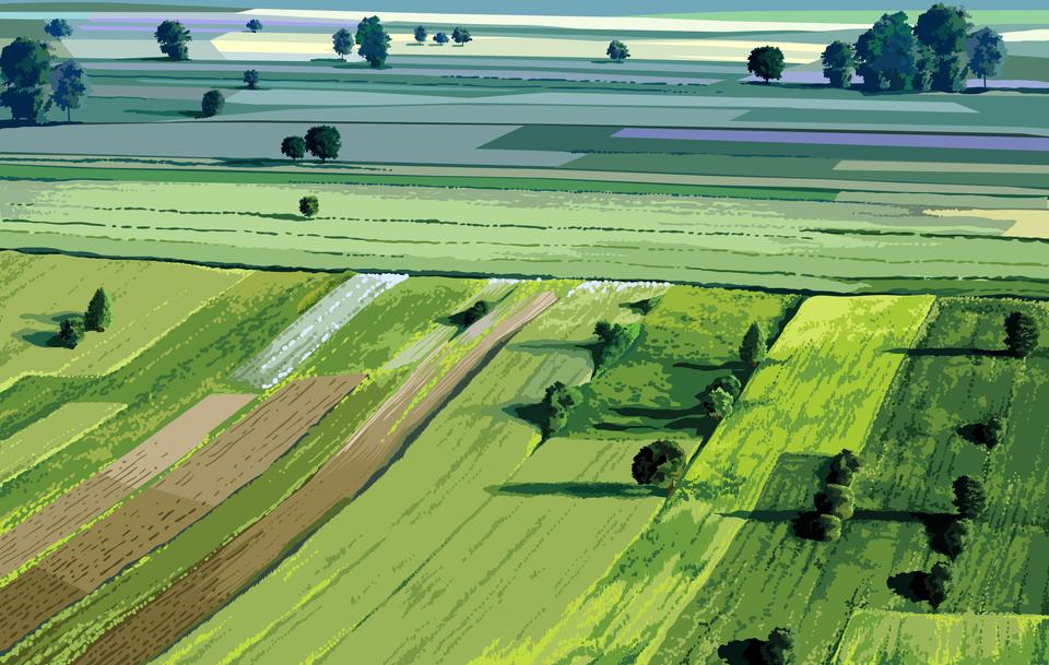 Ilustracja komputerowa ukazująca krajobraz rolniczy Niziny Mazowieckiej. Na ilustracji widoczne pasy zielonych pól znielicznymi drzewami.
