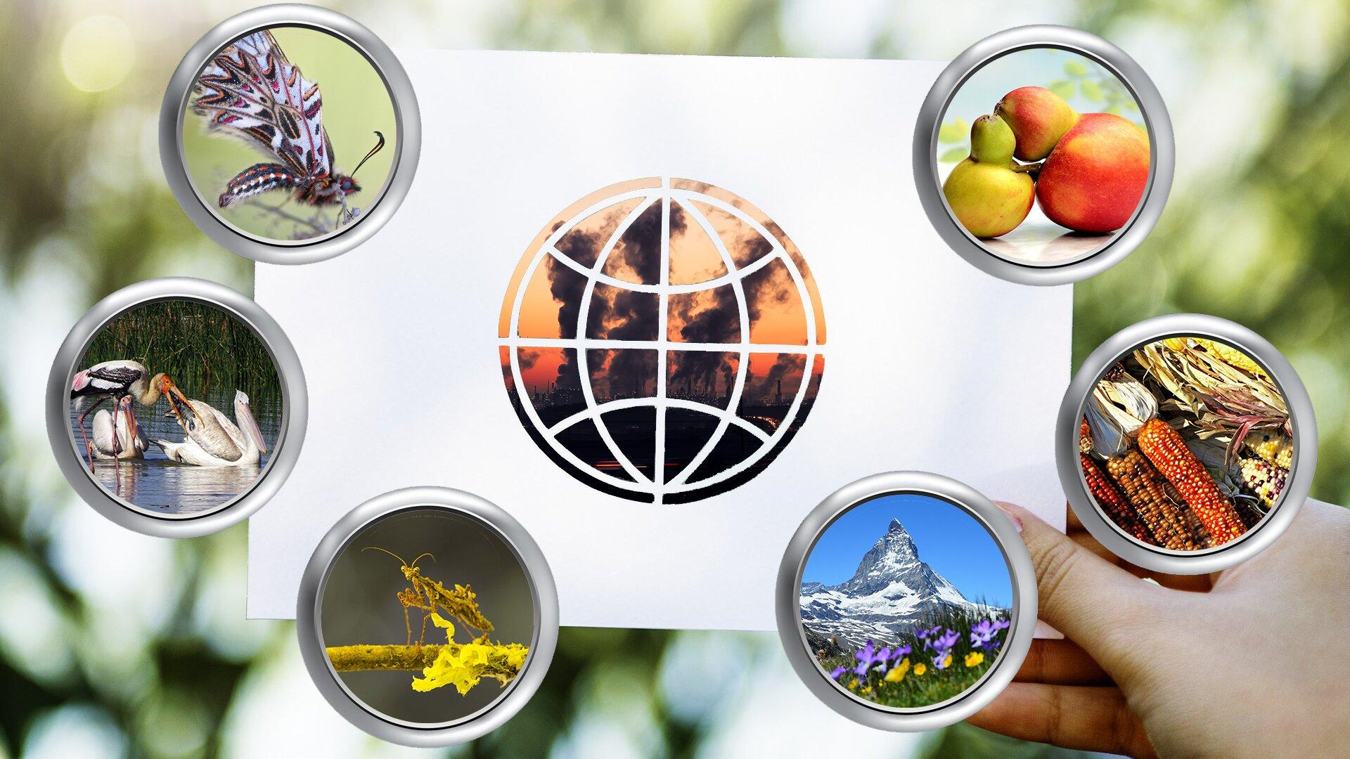 Ilustracja przedstawia zdjęcie ręki trzymającej białą kartkę. Wcentrum kartki umieszczone zostało koło, wewnątrz którego umieszczono zdjęcie kominów emitujących czarny dym. Na koło naniesiono schematyczną siatkę kartograficzną. Całość symbolizuje kulę ziemską inawiązuje do zanieczyszczania środowiska. Kartka otoczona jest półkoliście sześcioma kołami, wktóre wkomponowano zdjęcia przedstawiające różne elementy przyrody. Kolejno (od górnego lewego rogu): motyla, ptaki wodne, żółtego owada, ośnieżoną górę, kolby kukurydzy, owoce.