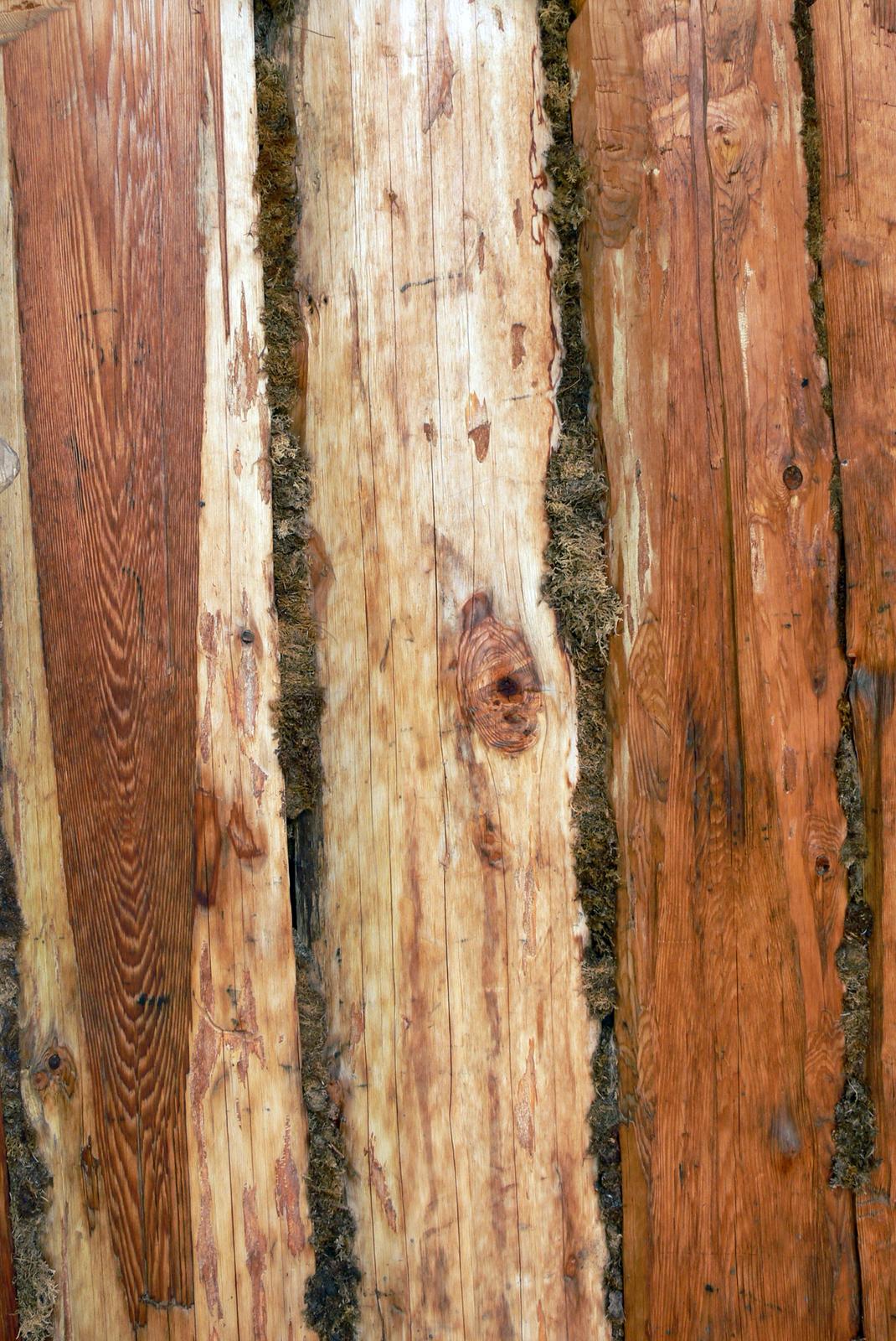 Zdjęcie drewnianych bali konstrukcji domu uszczelnionych mchem.