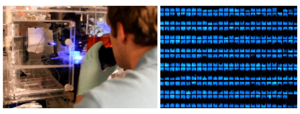 """Fotografia zprawej przedstawia zbliżenie człowieka wbiałym fartuchu irękawiczkach. Znajduje się wpomieszczeniu pełnym szklanych rurek oraz innego sprzętu. Człowiek trzyma czarno – pomarańczowe urządzenie. Wgłębi świecące na niebiesko elementy. Fotografia prawa przedstawia ekran pełen niebieskich plamek na czarnej kratce. To świecące na niebiesko bakterie, zktórych naukowcy złożyli """"żywy ekran""""."""