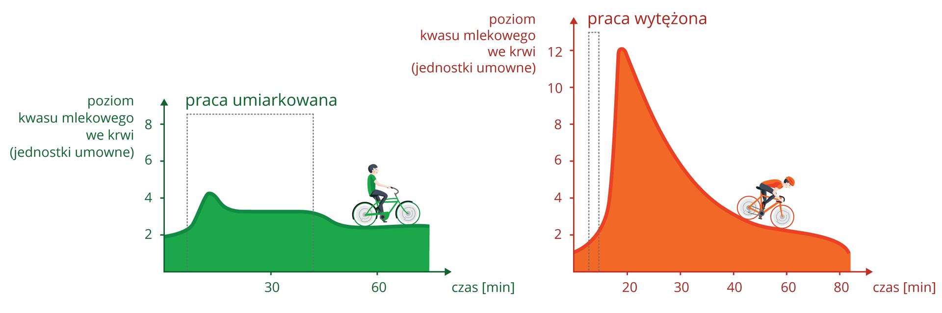 Ilustracja przedstawia dwa wykresy, odnoszące się do poziomu kwasu mlekowego wmięśniach podczas wysiłku. Na osiach Xzaznaczono czas, na osiach Ypoziom kwasu mlekowego we krwi wmilimolach na litr. Czas pracy zaznaczono kropkowanymi liniami. Zlewej wykres zielony dla pracy umiarkowanej. Symbolizuje ją sylwetka człowieka na rowerze, jadącego bez pospiechu. Zprawej pomarańczowy wykres dla pracy wytężonej. Symbolizuje ją kolarz, jadący szybko zgórki.
