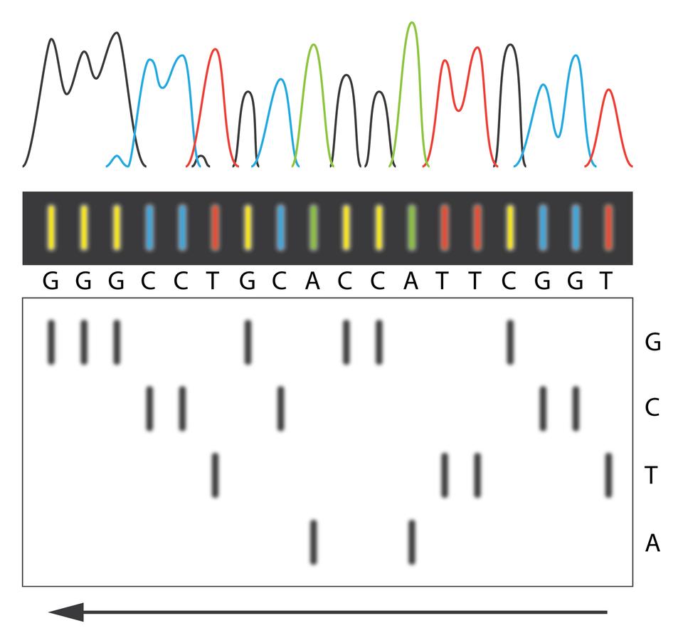 Wykorzystanie DNA
