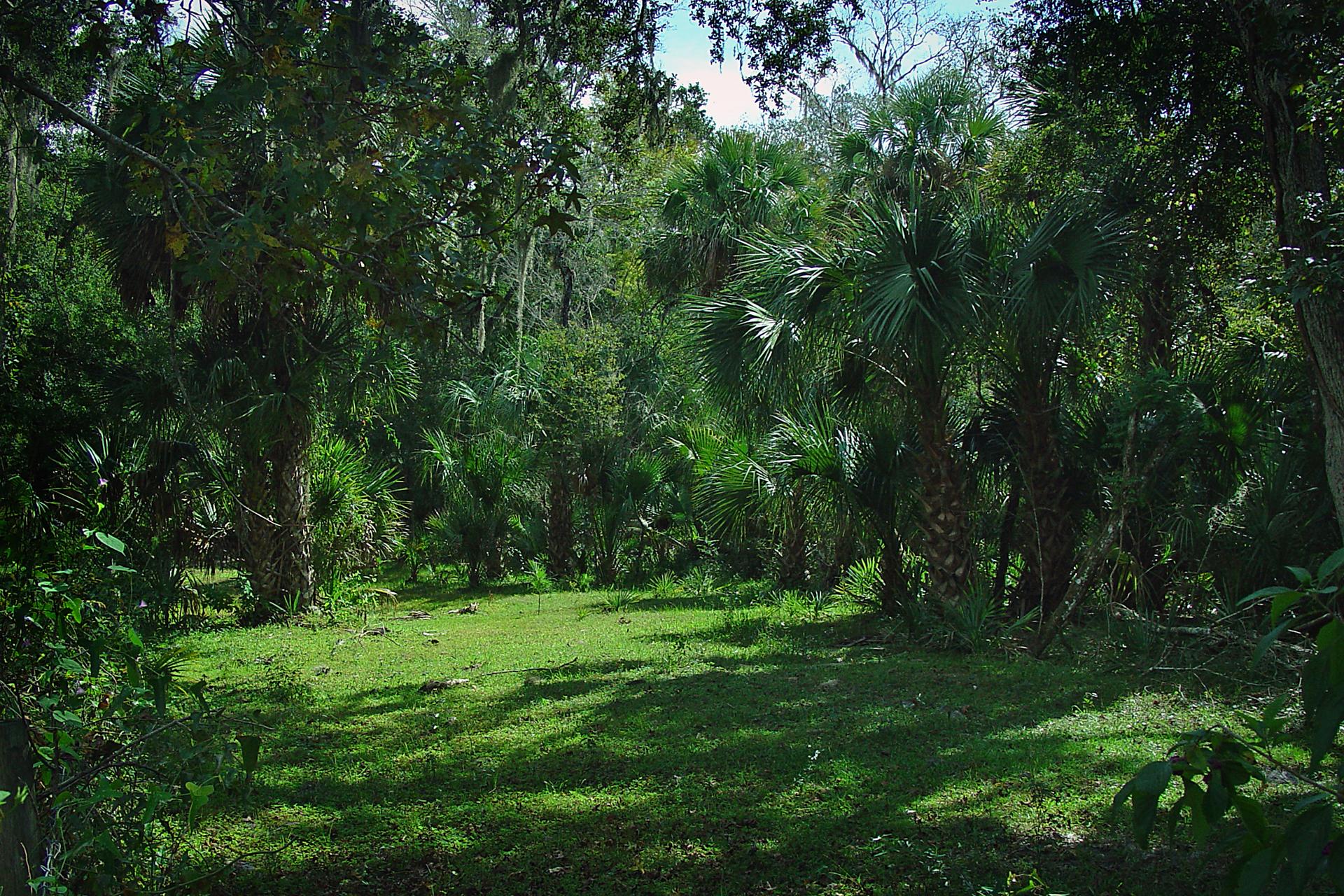 Fotografia prezentuje zielony las równikowy. Drzewa maja rozłożyste korony. Na pierwszym planie widać polanę pokryta trawą.