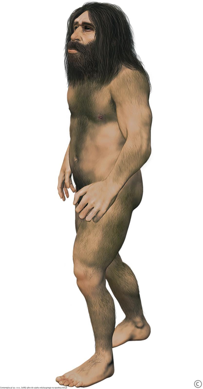 Wyprostowany, długowłosy człowiek obudowie ciała bardzo podobnej do budowy ciała człowieka współczesnego, lecz ocharakterystycznej twarzy zgłębokimi oczodołami.