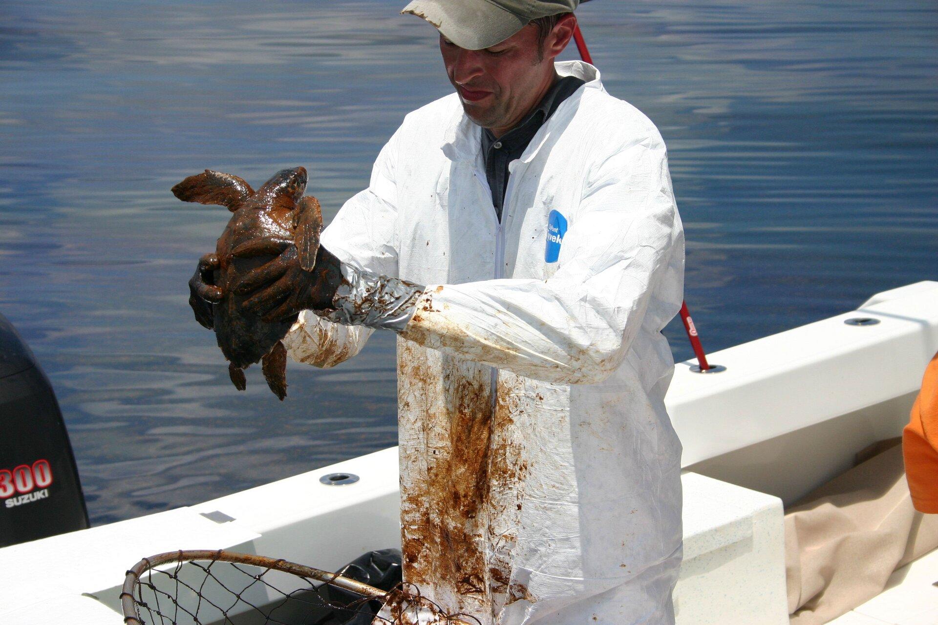 Na zdjęciu lekarz weterynarii wbiałym fartuchu pobrudzonym brązową cieczą. Trzyma wrękach żółwia zabrudzonego ropą naftową.
