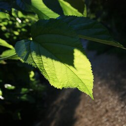 Fotosynteza – czyli czym jest samożywność?