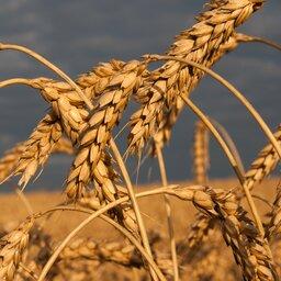 Czym jest rolnictwo ekologiczne?