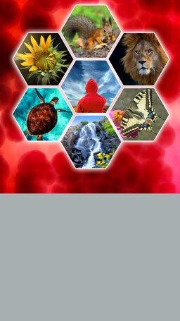 Związki chemiczne budujące organizm