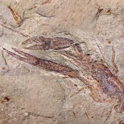 Skąd wiemy, że ewolucja ma miejsce?