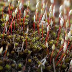 Mchy – małe niesamowite rośliny