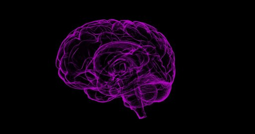 Ośrodki nerwowe mózgowia ikontrolowane przez nie funkcje życiowe