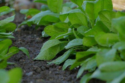 Charakterystyka najważniejszych poziomów glebowych