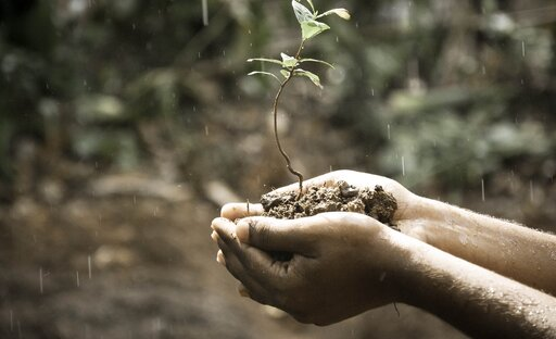 Żyzność iurodzajność gleby