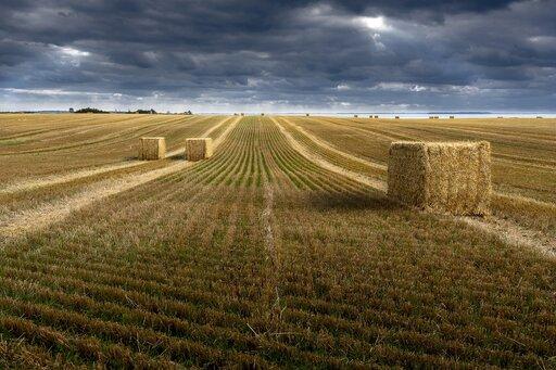 Stan polskiego rolnictwa na tle rolnictwa krajów UE