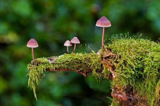 Różnorodność zarodników grzybów