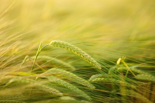 Regulatory wzrostu irozwoju roślin