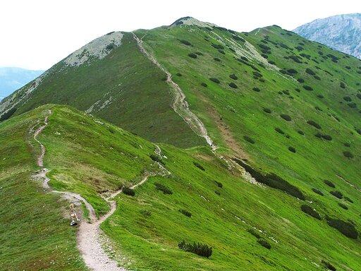 Porównanie pięter roślinnych wTatrach zgórami Europy