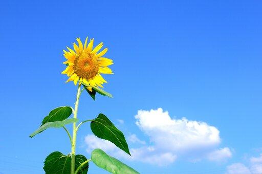 Jak przebiega proces fotosyntezy?