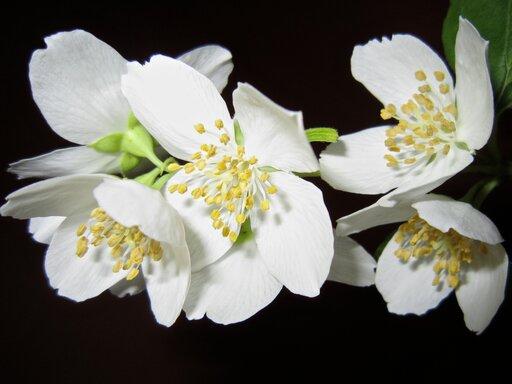 Wświecie zapachów, czyli gdzie wprzyrodzie występują estry?