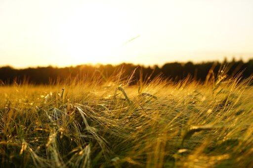 Regionalizacja rolnictwa