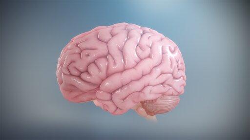 Struktury ochronne centralnego układu nerwowego ipowstawanie płynu mózgowo-rdzeniowego