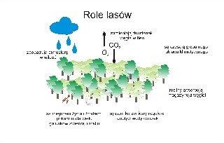 Role lasów