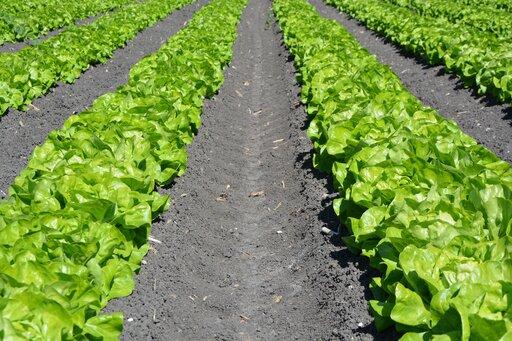 Przydatność rolnicza gleb na świecie