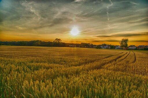 Wpływ warunków pozaprzyrodniczych na rozwój polskiego rolnictwa