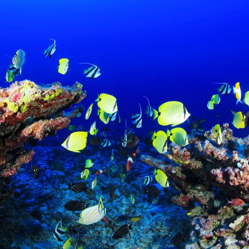 Bioróżnorodność ajakość ludzkiego życia