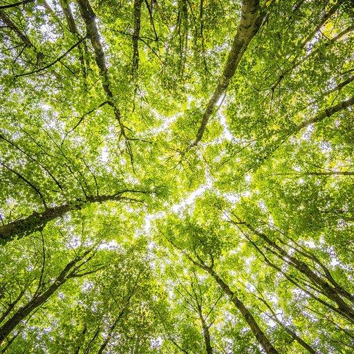 Organizacje działające na rzecz ochrony środowiska wPolsce ina świecie