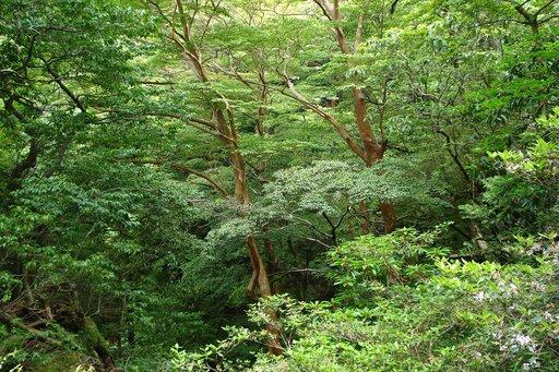 Konieczność racjonalnego gospodarowania zasobami leśnymi