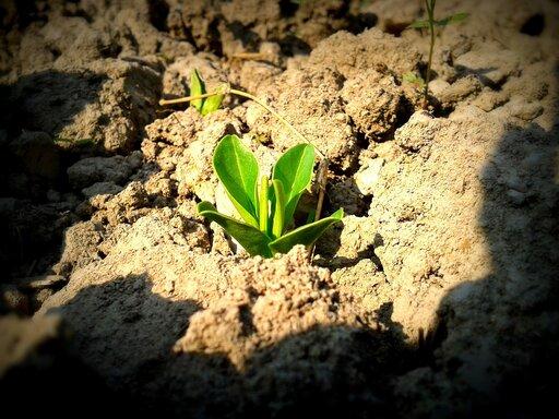 Określanie nazwy iklasy bonitacyjnej gleb