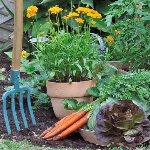 Domowe ogródki irośliny uprawne